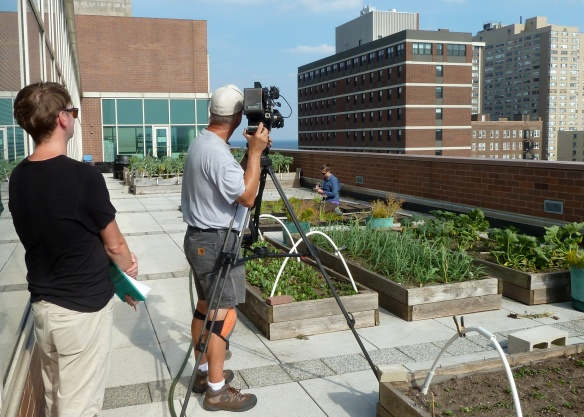It was strange to be fake-running my experiments on the green roofs as a film crew captured every move.