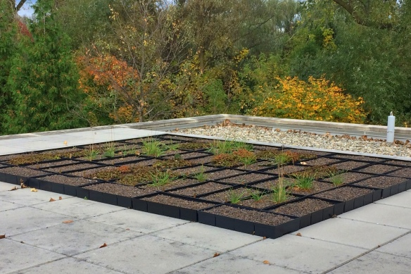 The green roof trays are ready for another winter as the colors of fall creep in.